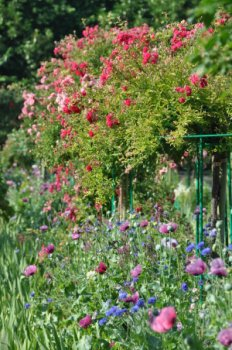 giverny-june.jpg
