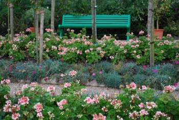 giverny-geranium.jpg