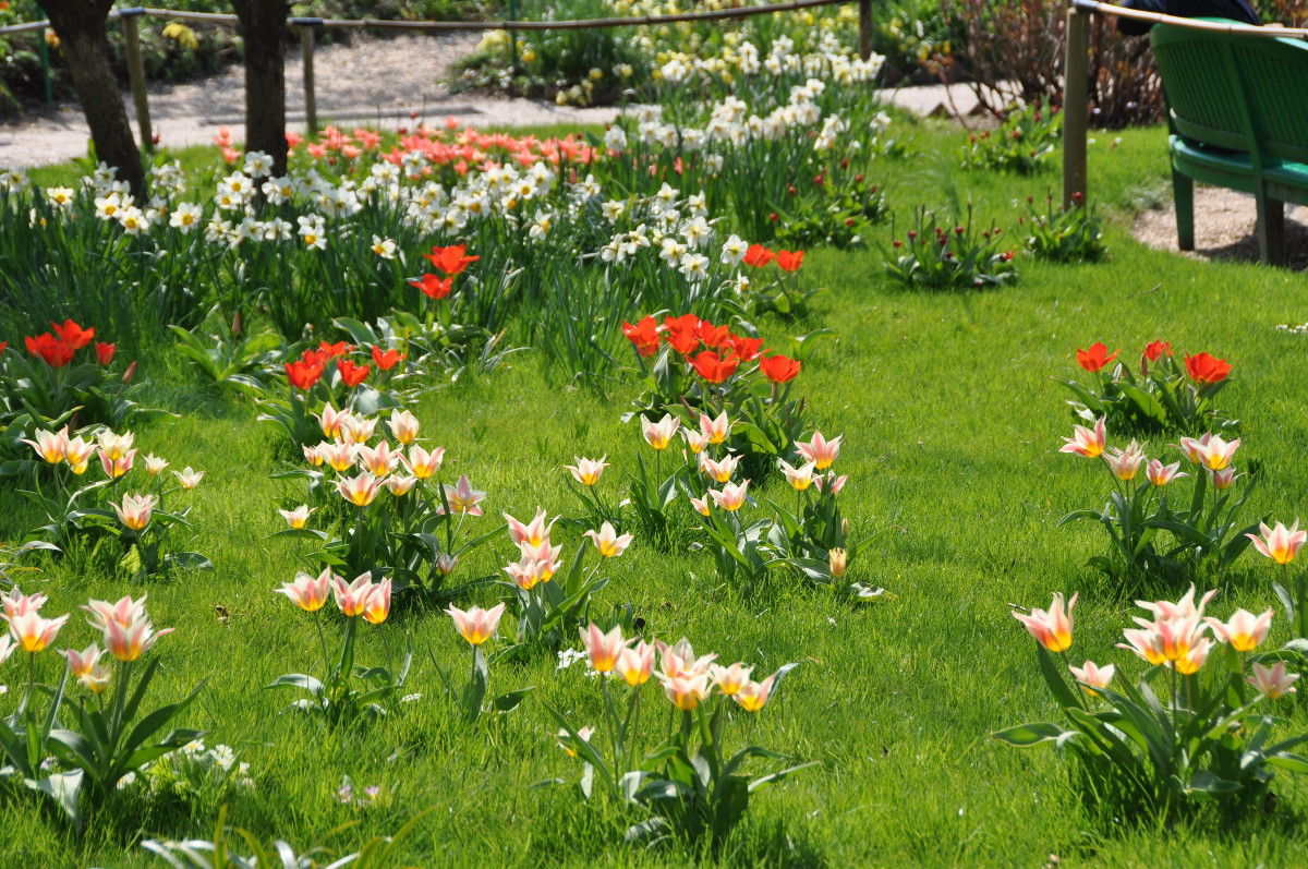 giverny-bulbs.jpg