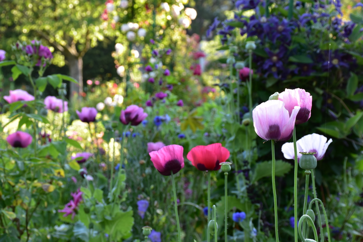giverny-june-colors