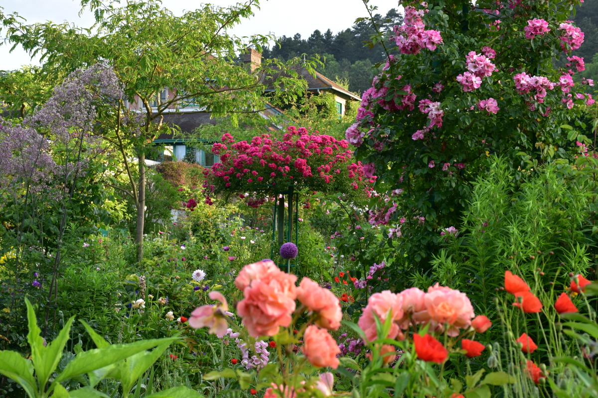 giverny-roses17