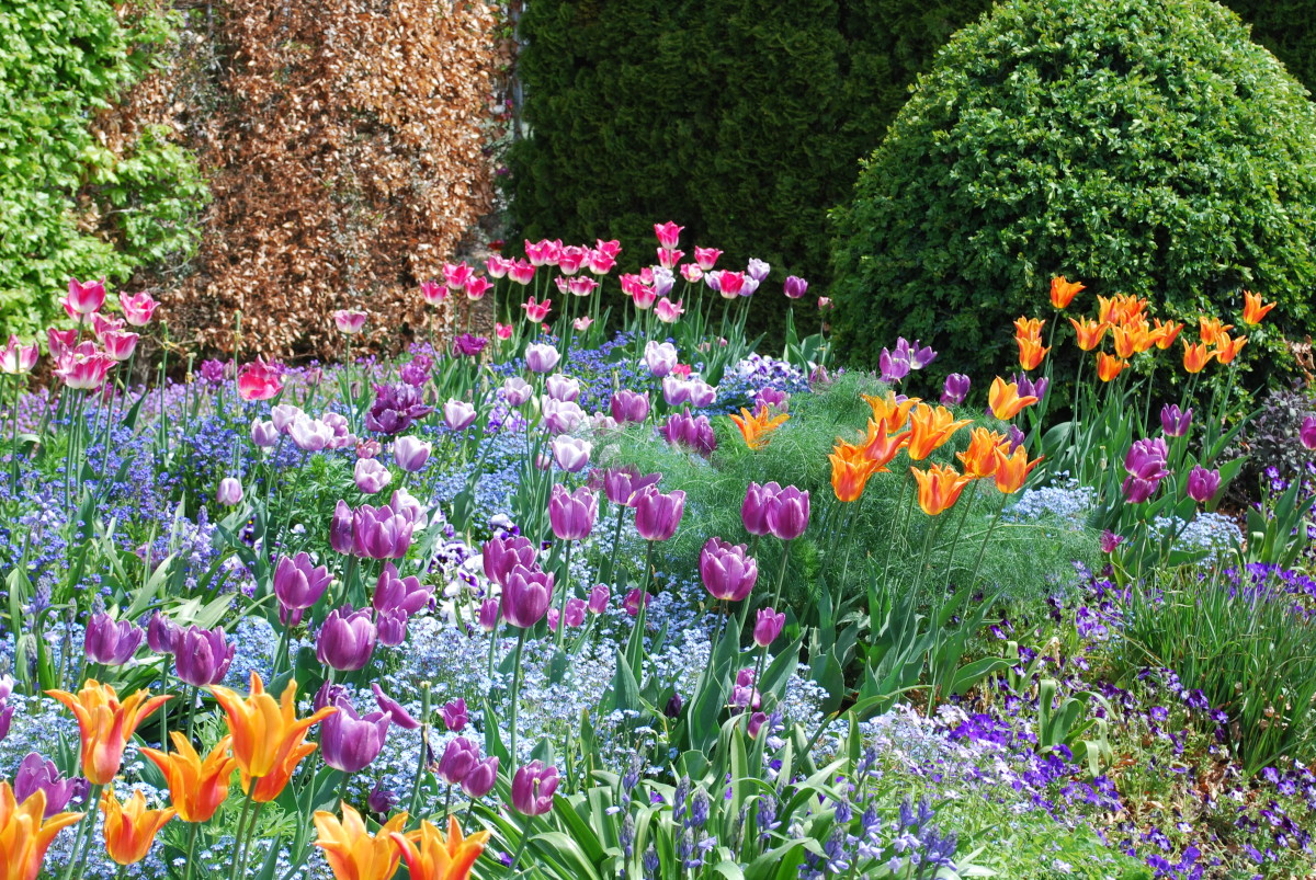 Giverny monets flower garden giverny tulipsg mightylinksfo