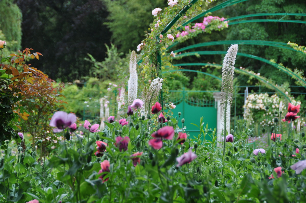 Giverny Pretty Pink Poppies