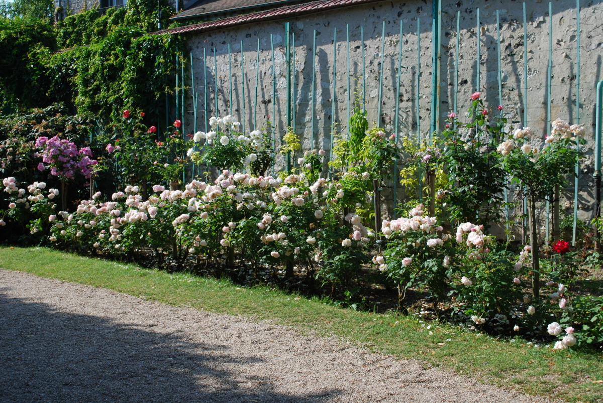 Landscaping Ideas Rose Garden : Giverny hidden rose garden