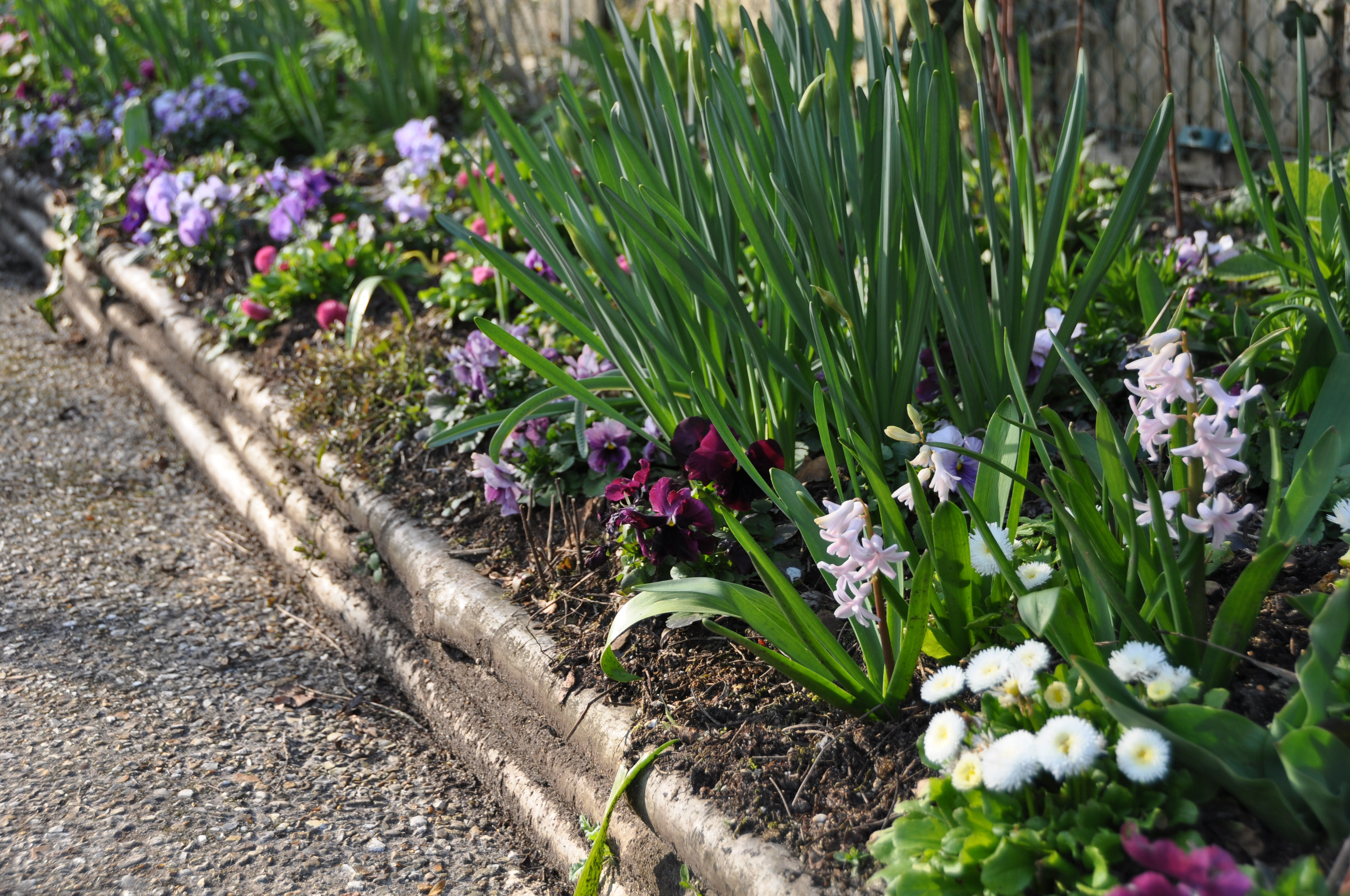 spring-border