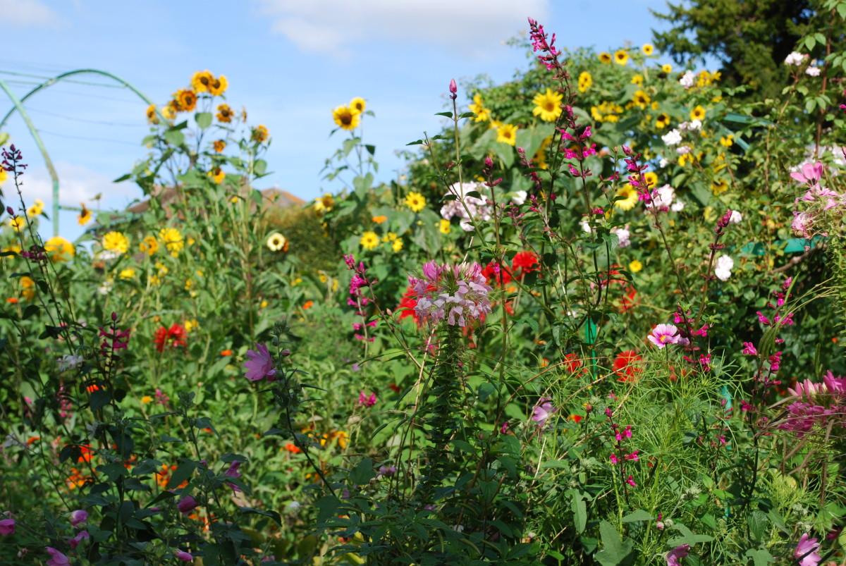 summer-flower.jpg