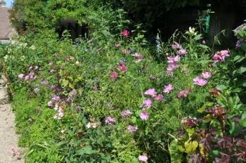 flower-hedge