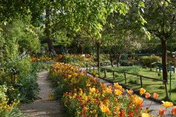 orange-tulip-bed-giverny