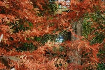 giverny-autumn.jpg