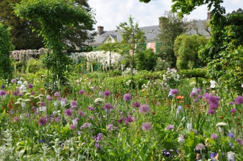giverny-alliums.jpg