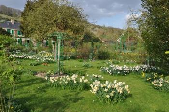 giverny-daffodils.jpg