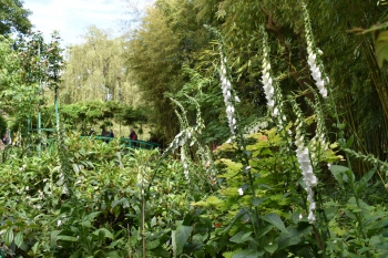 june-giverny-foxgloves