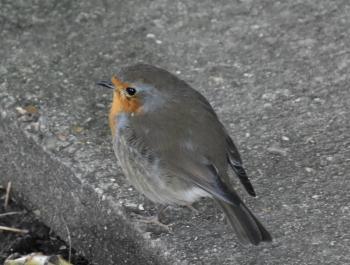 robin-giverny