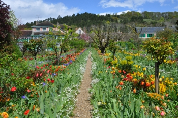 tulip-rows-giverny