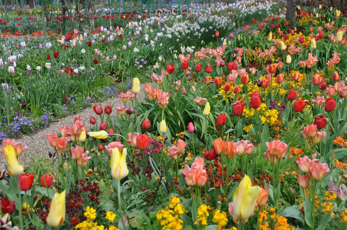 tulip-border-giverny.jpg