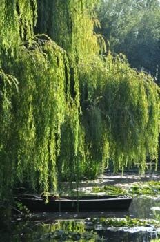 boat-willow.jpg