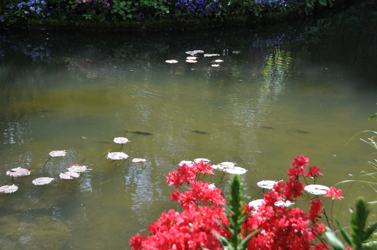 fish-giverny