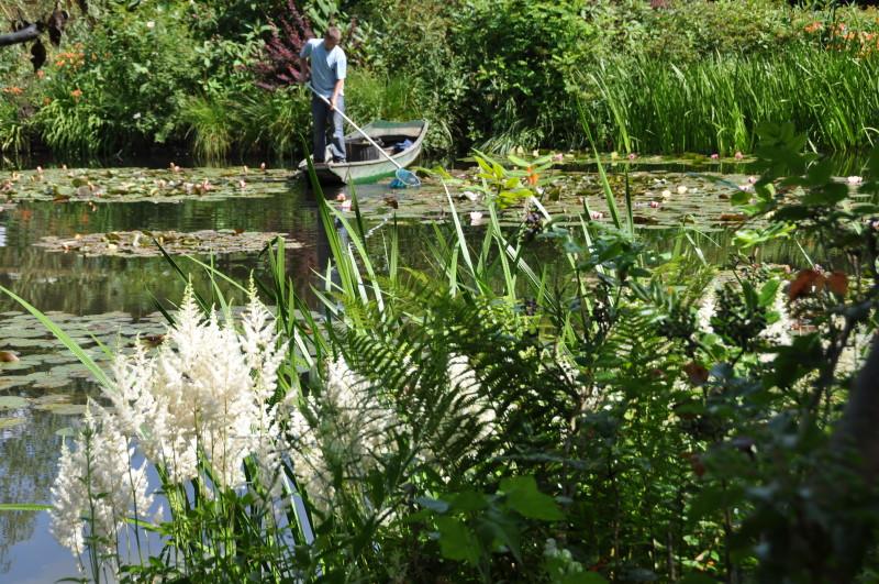 gardener-pond