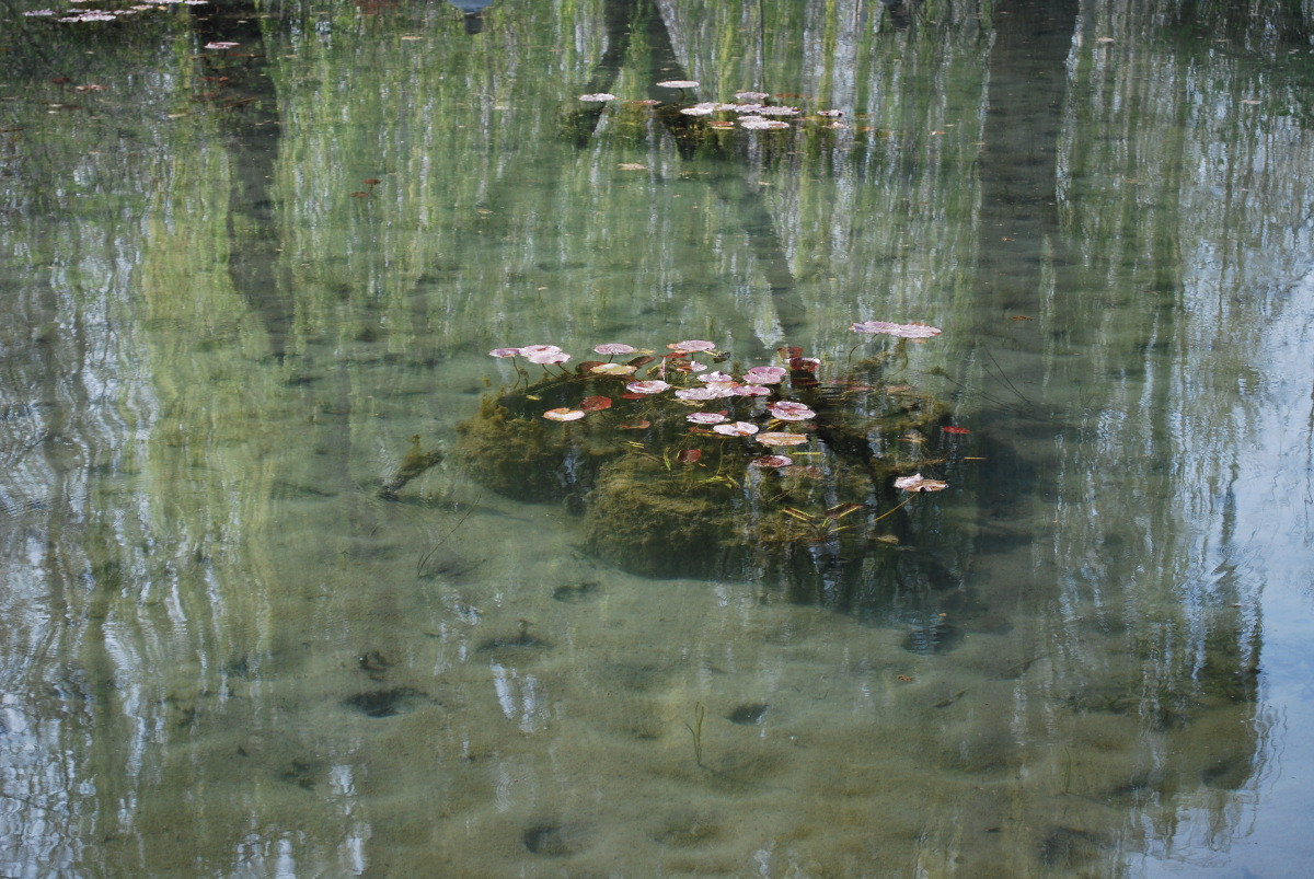 giverny-spring-pond