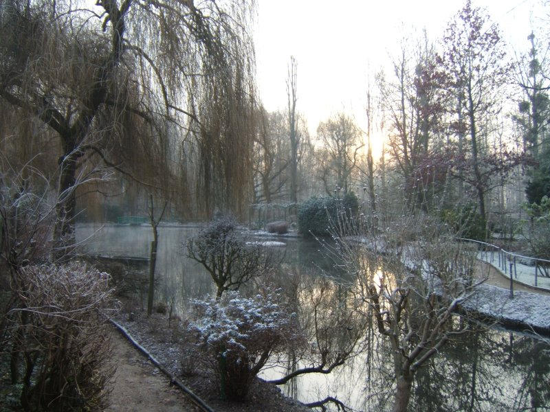 pond-in-winter.jpg