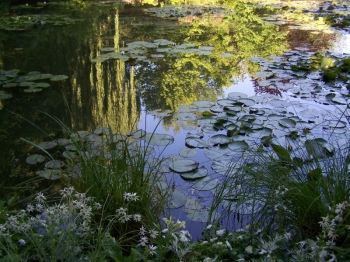 monet-pond.jpg