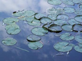 sky-waterlilies.jpg