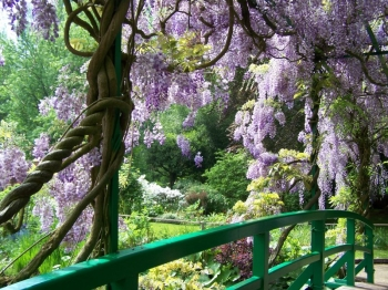 wisteria-bridge.jpg