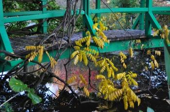 wisteria-fall