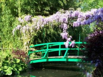 wisteria-giverny.jpg