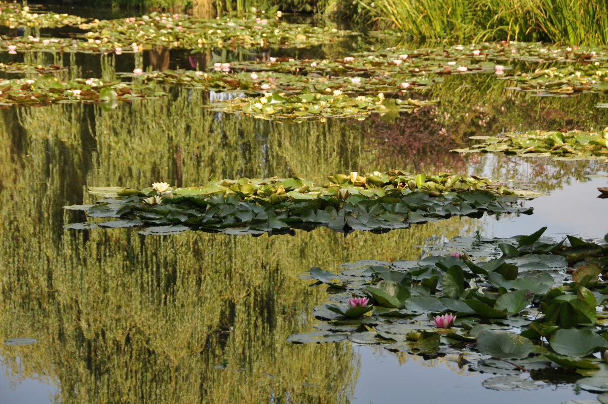 water-lilies-giverny