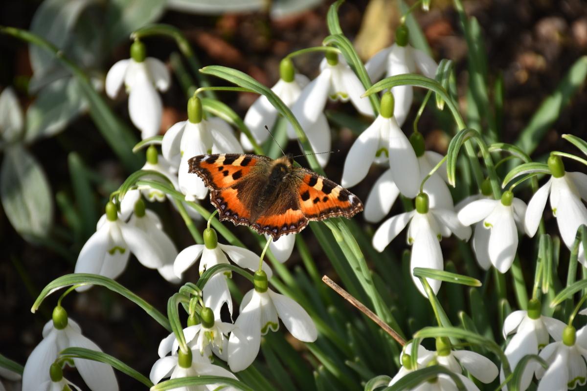 Flores de invierno - Seriamente Flores - Flores - Jardinería