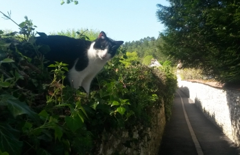 giverny-cat-wall